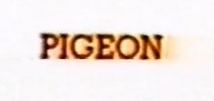 pigeon_skate_video