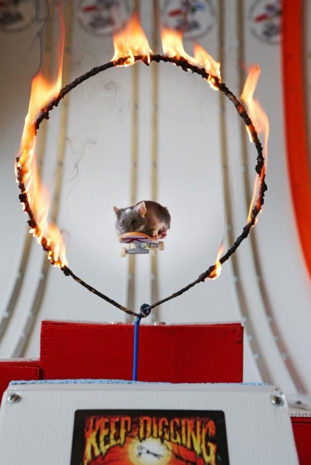 skateboarding-mouse