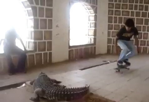 crocodile_ollie_skate